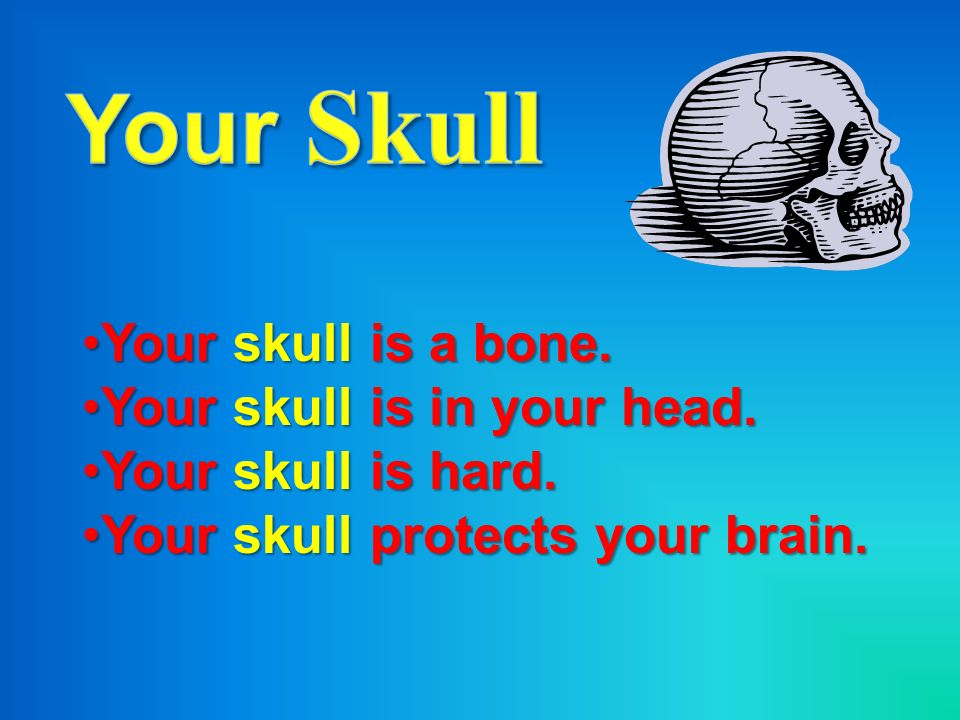 Your Skull Your skull is a bone. Your skull is in your head.