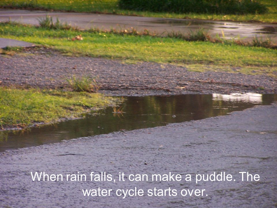 When rain falls, it can make a puddle. The water cycle starts over.