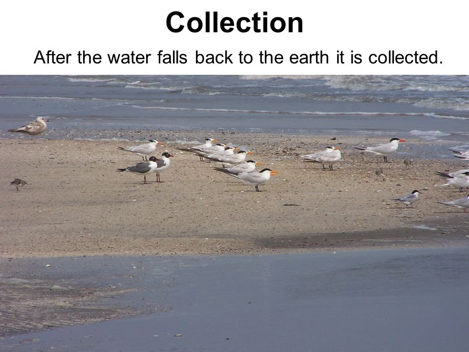 After the water falls back to the earth it is collected.