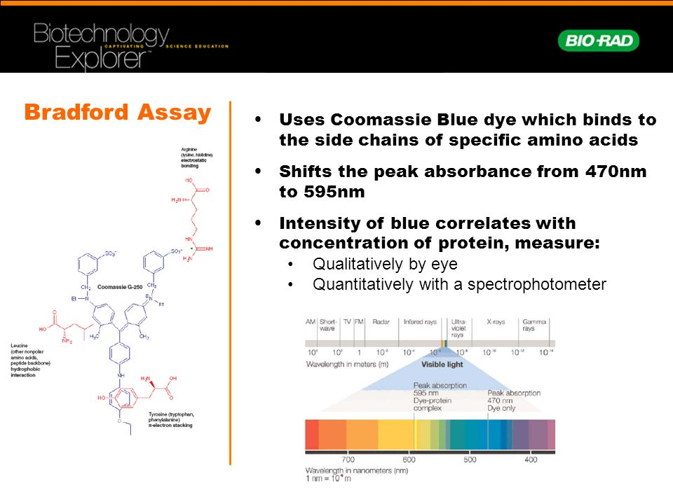 bradford protein asssay Protein analysis-determination of protein concentration protein concentration have been developed was developed by bradford in 1976.