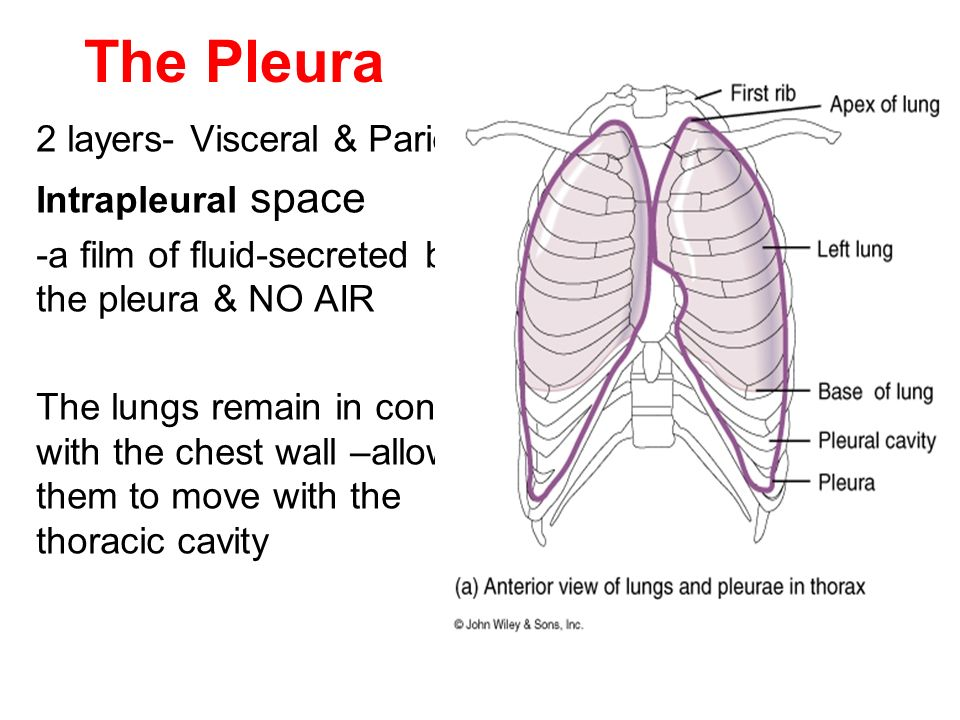 respiratory physiology ppt video online download