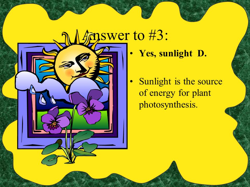 Answer to #3: Yes, sunlight D.