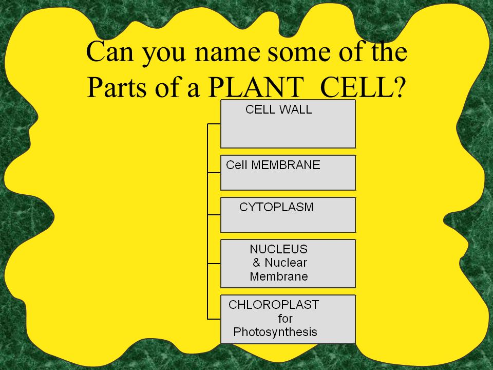 Can you name some of the Parts of a PLANT CELL