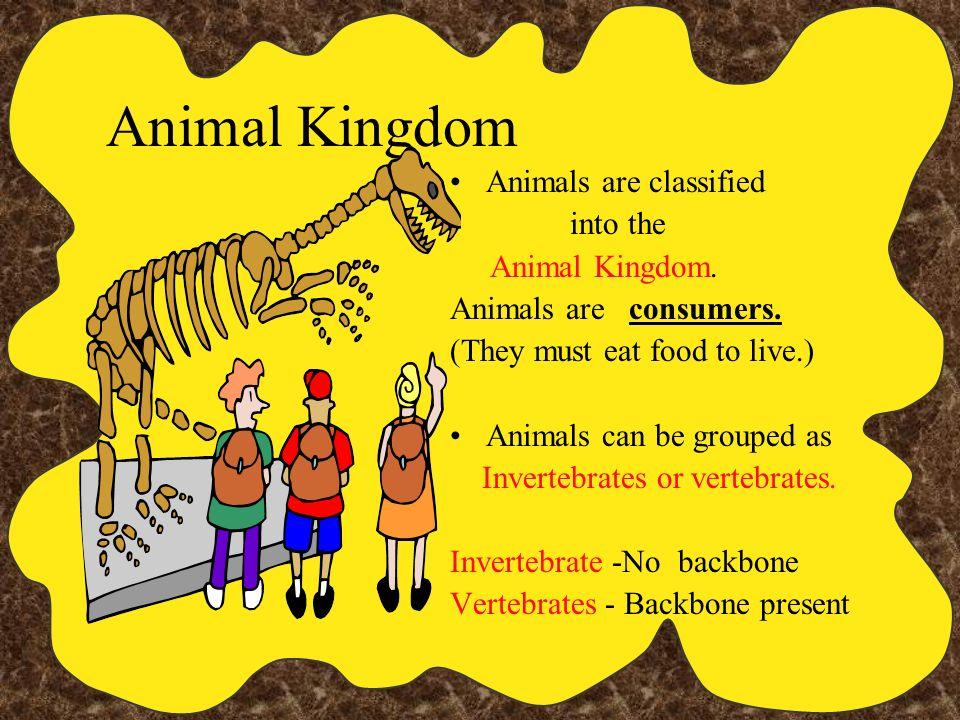 Animal Kingdom Animals are classified into the Animal Kingdom.