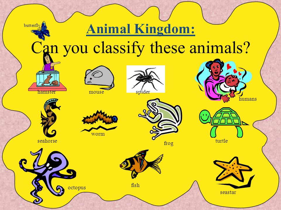 Animal Kingdom: Can you classify these animals