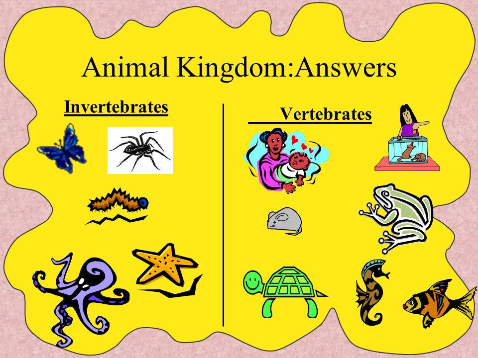 Animal Kingdom:Answers