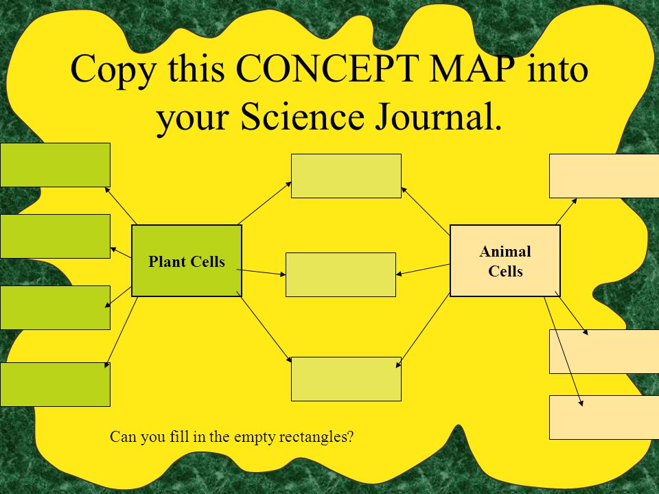 Copy this CONCEPT MAP into your Science Journal.