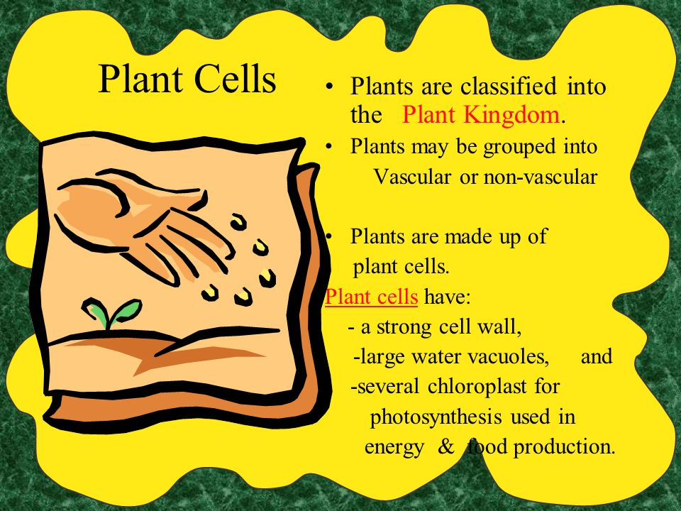 Plant Cells Plants are classified into the Plant Kingdom.