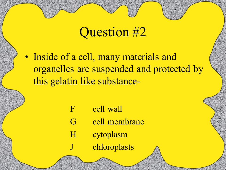 Question #2 Inside of a cell, many materials and organelles are suspended and protected by this gelatin like substance-