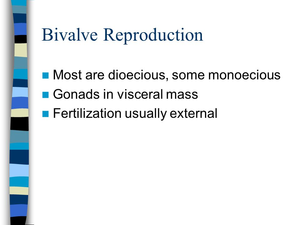 Bivalve Reproduction Most are dioecious, some monoecious