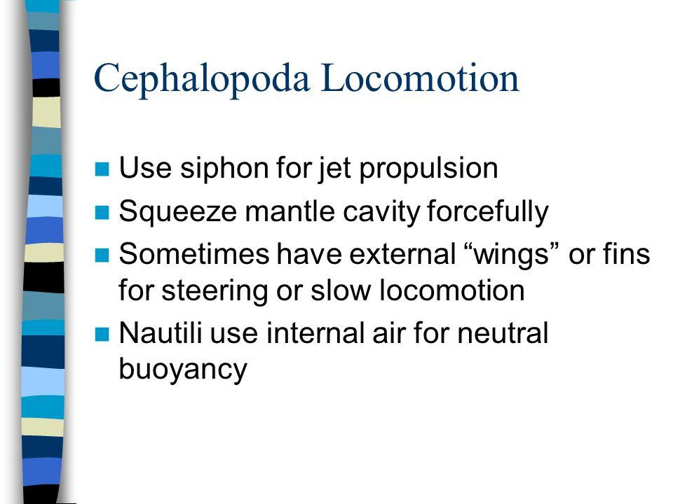 Cephalopoda Locomotion