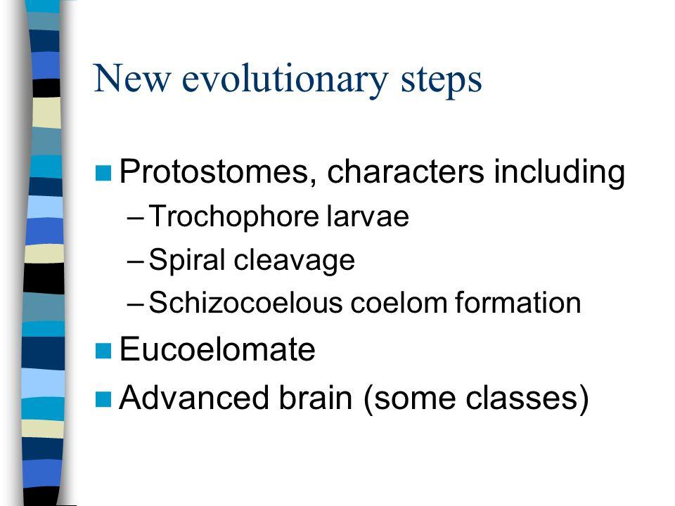 New evolutionary steps