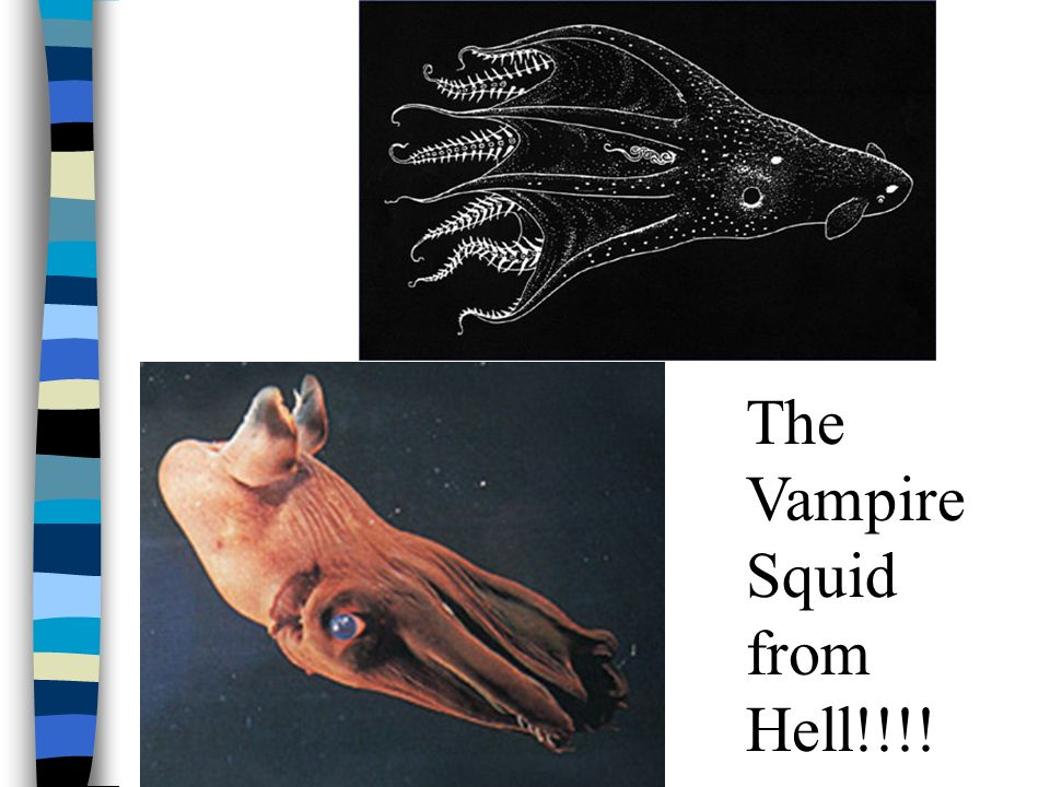 The Vampire Squid from Hell!!!!