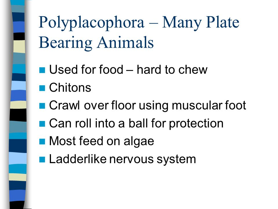 Polyplacophora – Many Plate Bearing Animals