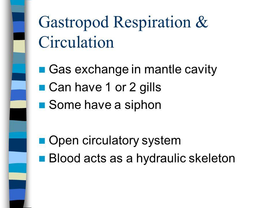 Gastropod Respiration & Circulation