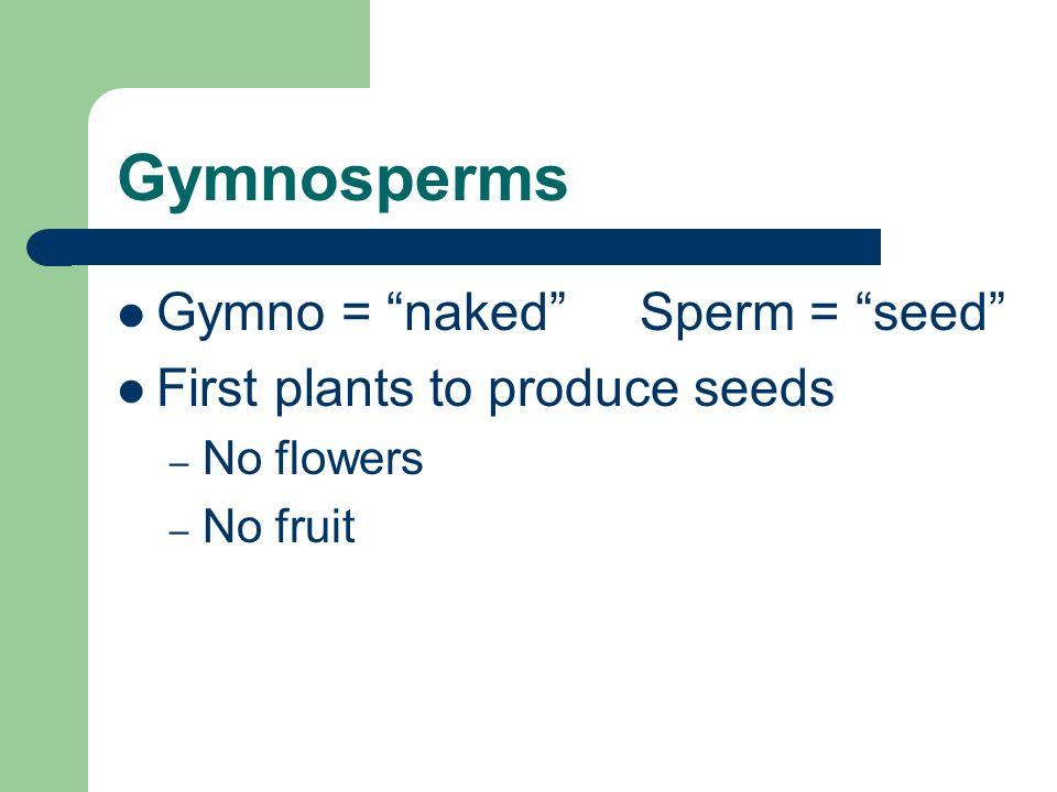 Gymnosperms Gymno = naked Sperm = seed