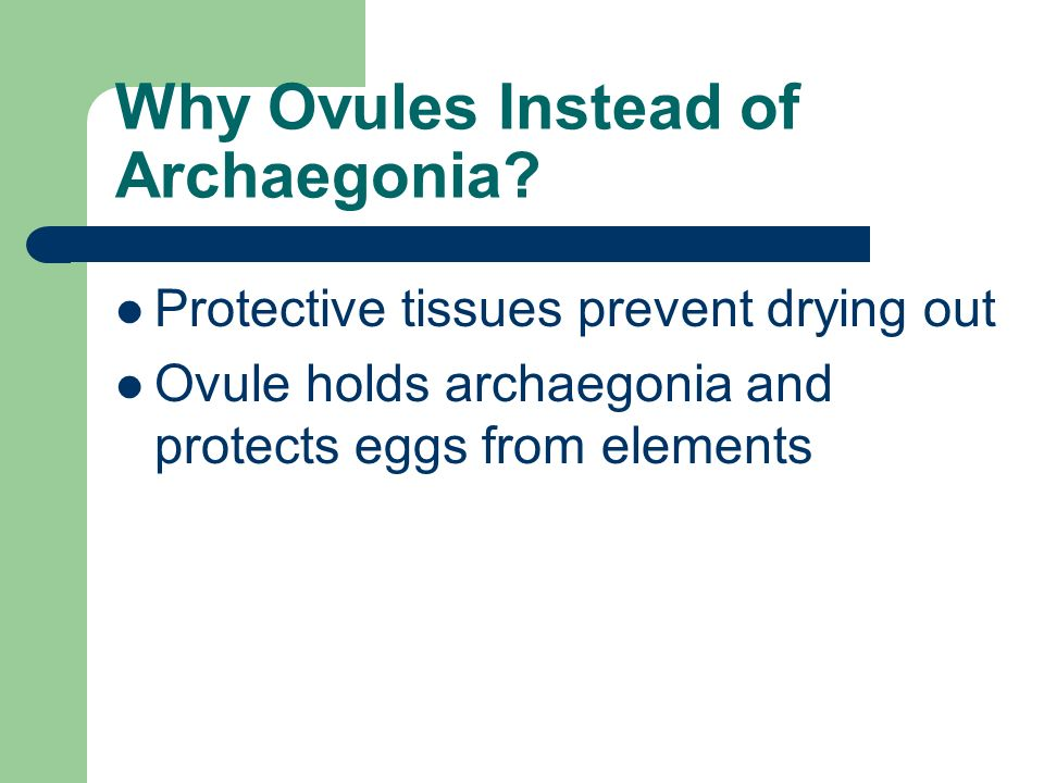 Why Ovules Instead of Archaegonia