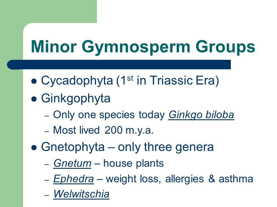 Minor Gymnosperm Groups
