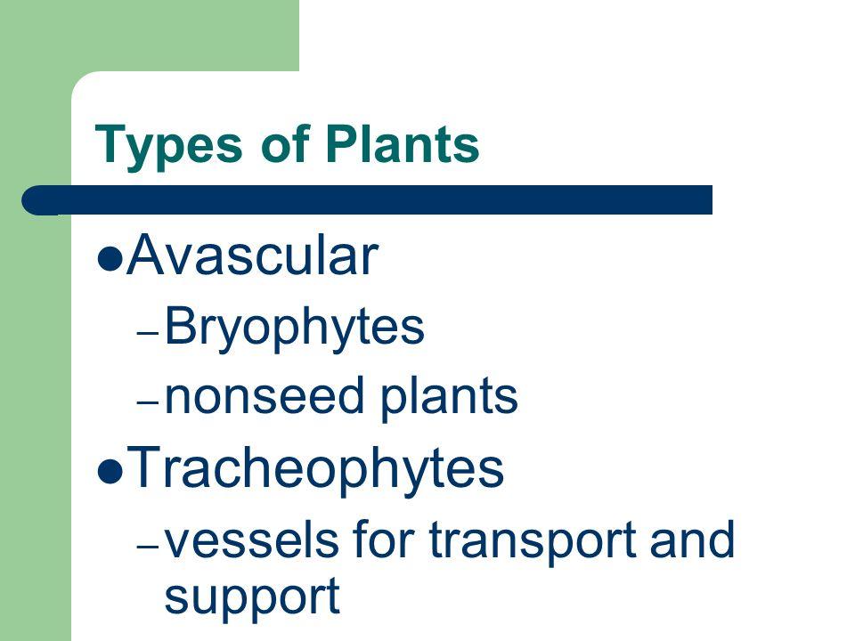 Avascular Tracheophytes Types of Plants Bryophytes nonseed plants