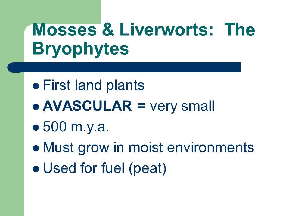Mosses & Liverworts: The Bryophytes
