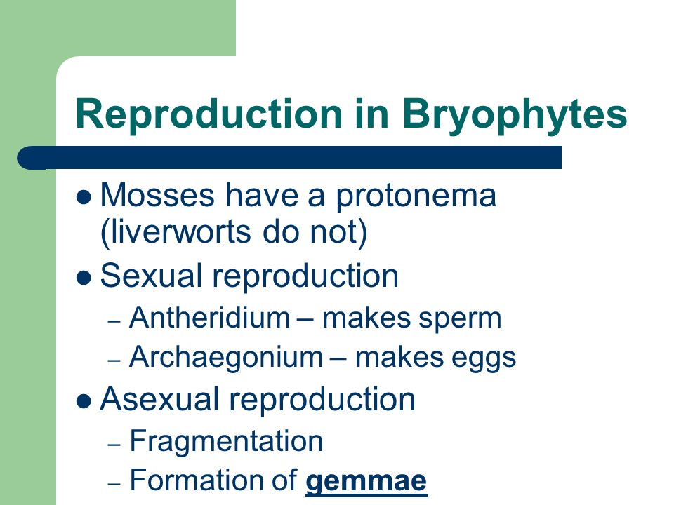 Reproduction in Bryophytes