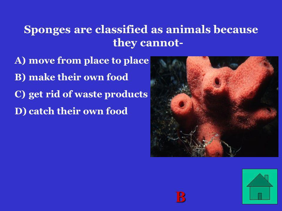 Sponges are classified as animals because they cannot-