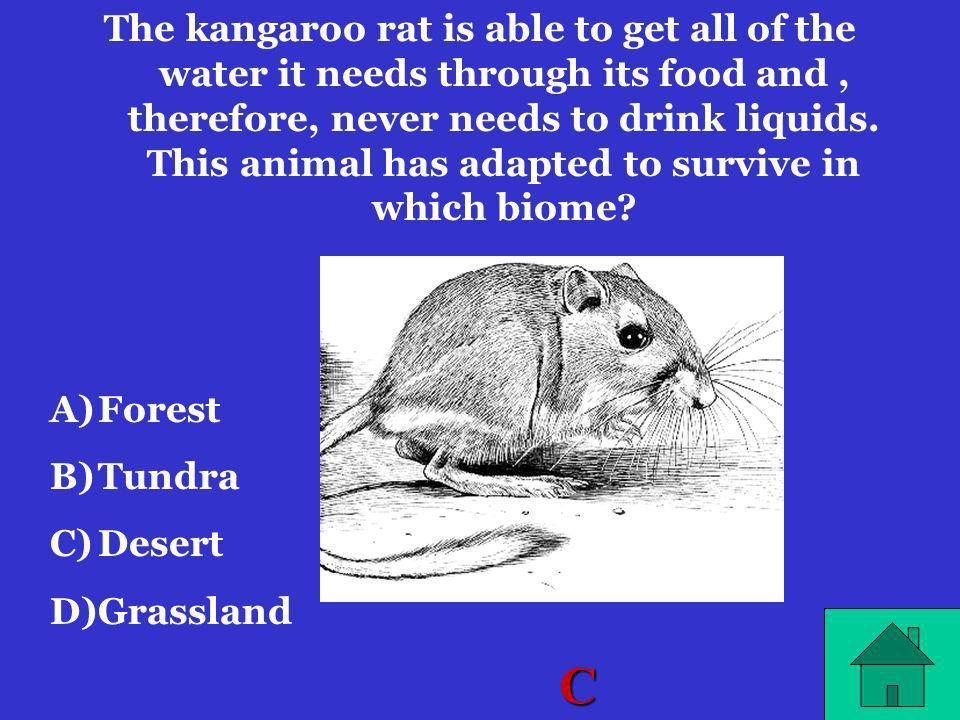 The kangaroo rat is able to get all of the water it needs through its food and , therefore, never needs to drink liquids. This animal has adapted to survive in which biome
