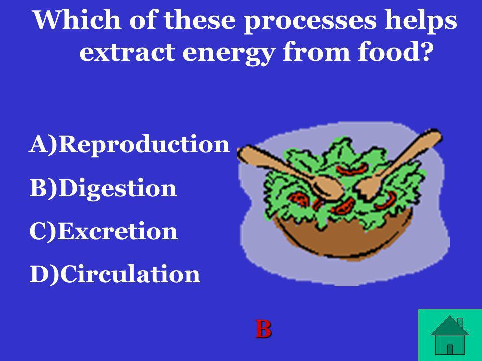 Which of these processes helps extract energy from food