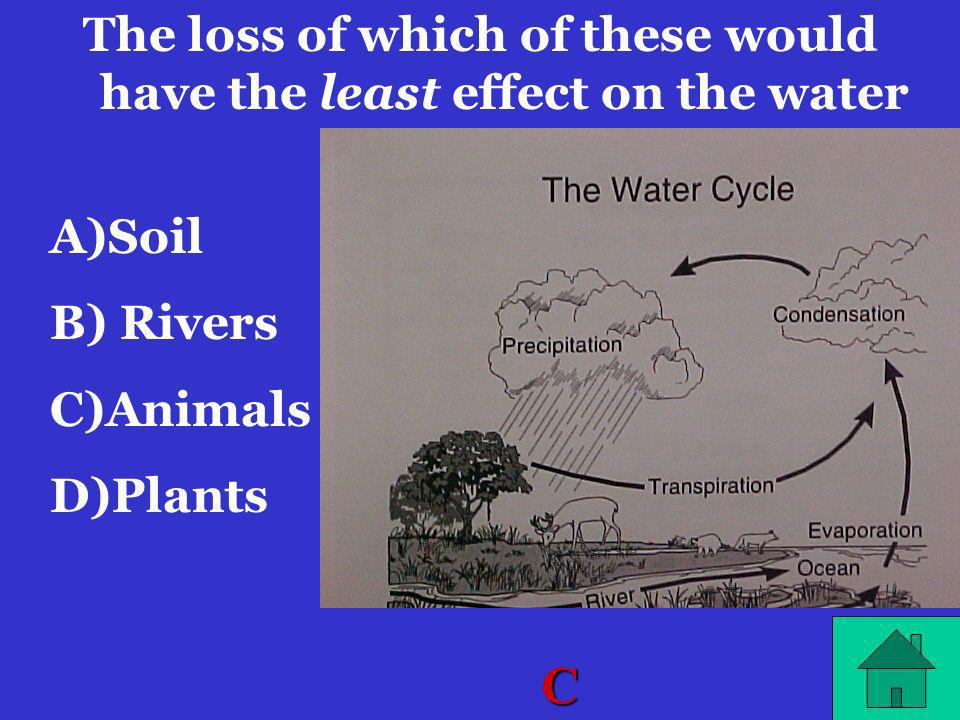 The loss of which of these would have the least effect on the water cycle