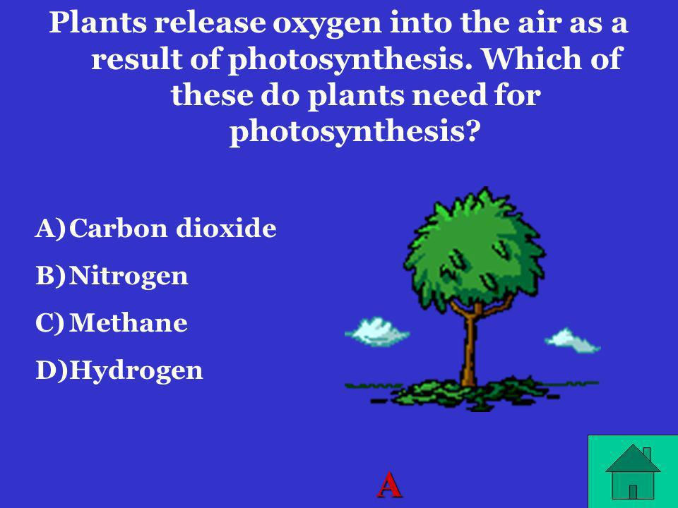 Plants release oxygen into the air as a result of photosynthesis