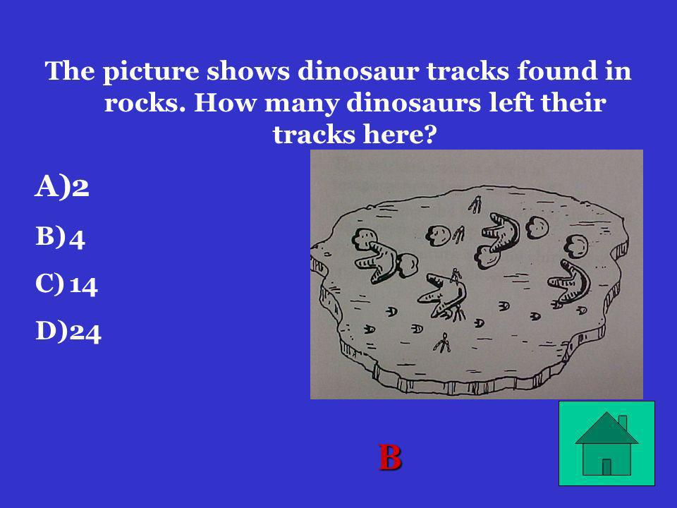 The picture shows dinosaur tracks found in rocks