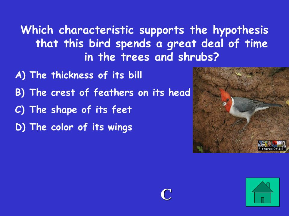 Which characteristic supports the hypothesis that this bird spends a great deal of time in the trees and shrubs