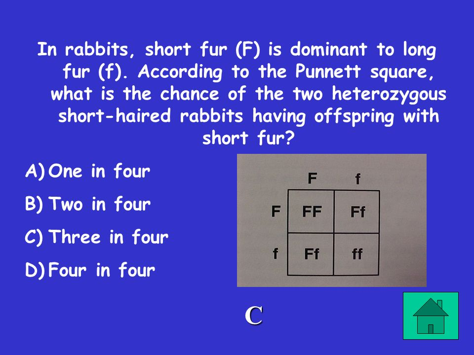 In rabbits, short fur (F) is dominant to long fur (f)