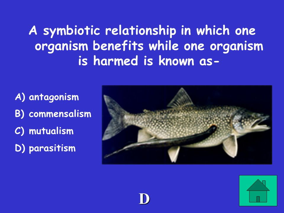 A symbiotic relationship in which one organism benefits while one organism is harmed is known as-