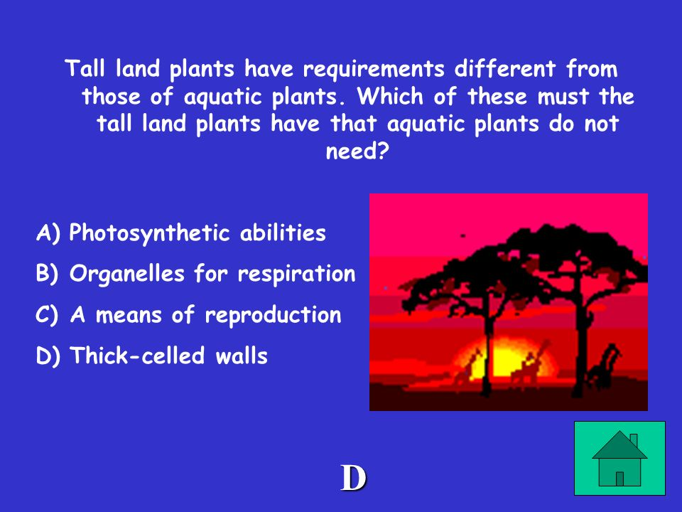 Tall land plants have requirements different from those of aquatic plants. Which of these must the tall land plants have that aquatic plants do not need