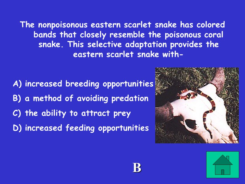 The nonpoisonous eastern scarlet snake has colored bands that closely resemble the poisonous coral snake. This selective adaptation provides the eastern scarlet snake with-