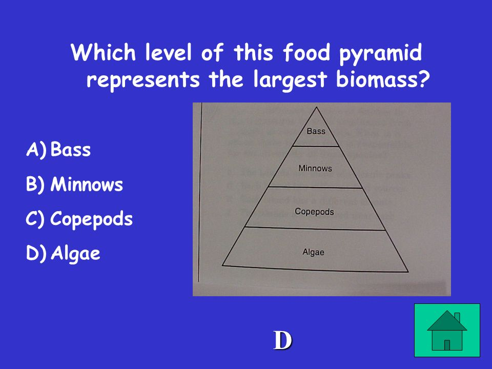 Which level of this food pyramid represents the largest biomass