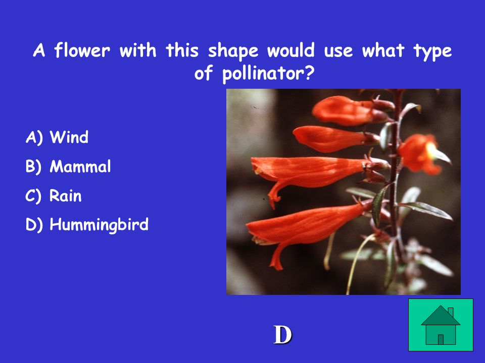 A flower with this shape would use what type of pollinator