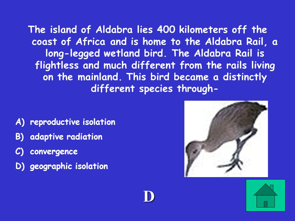 The island of Aldabra lies 400 kilometers off the coast of Africa and is home to the Aldabra Rail, a long-legged wetland bird. The Aldabra Rail is flightless and much different from the rails living on the mainland. This bird became a distinctly different species through-