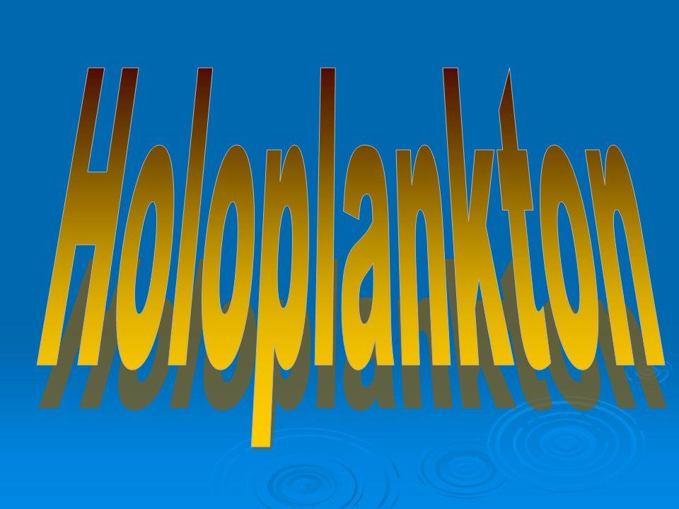 Holoplankton
