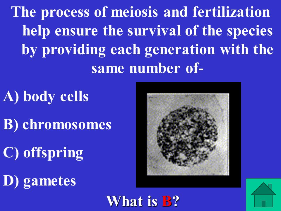 The process of meiosis and fertilization help ensure the survival of the species by providing each generation with the same number of-