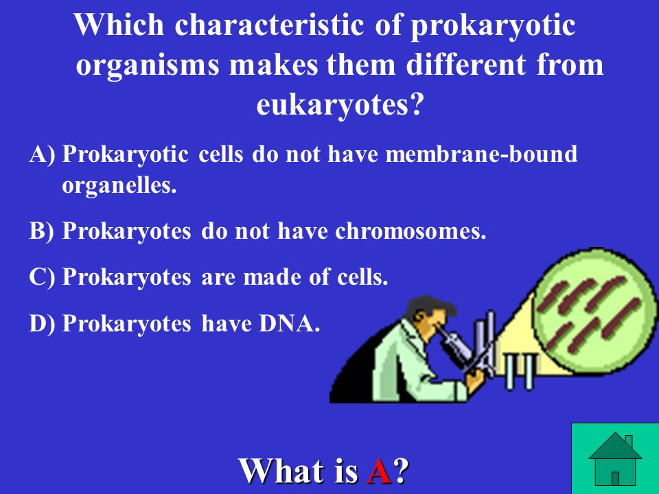 Which characteristic of prokaryotic organisms makes them different from eukaryotes