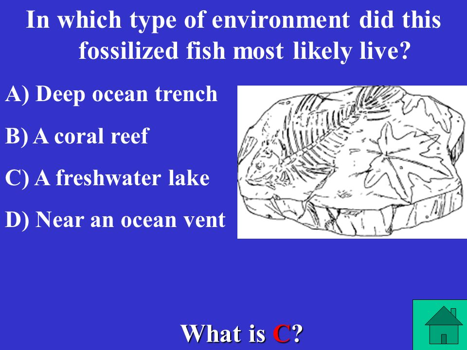 In which type of environment did this fossilized fish most likely live