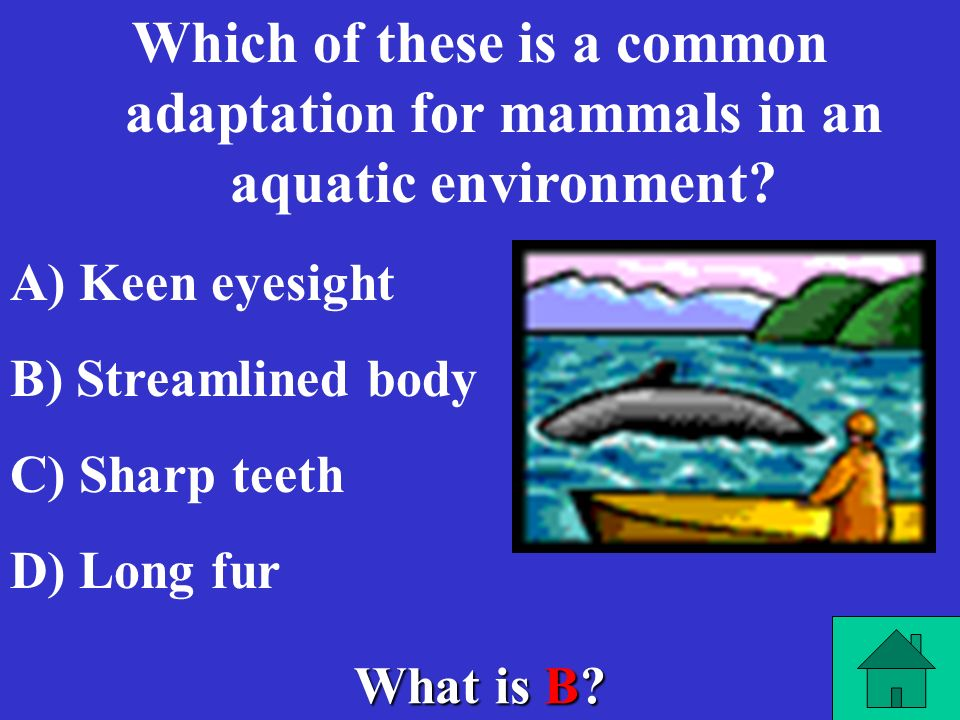 Which of these is a common adaptation for mammals in an aquatic environment