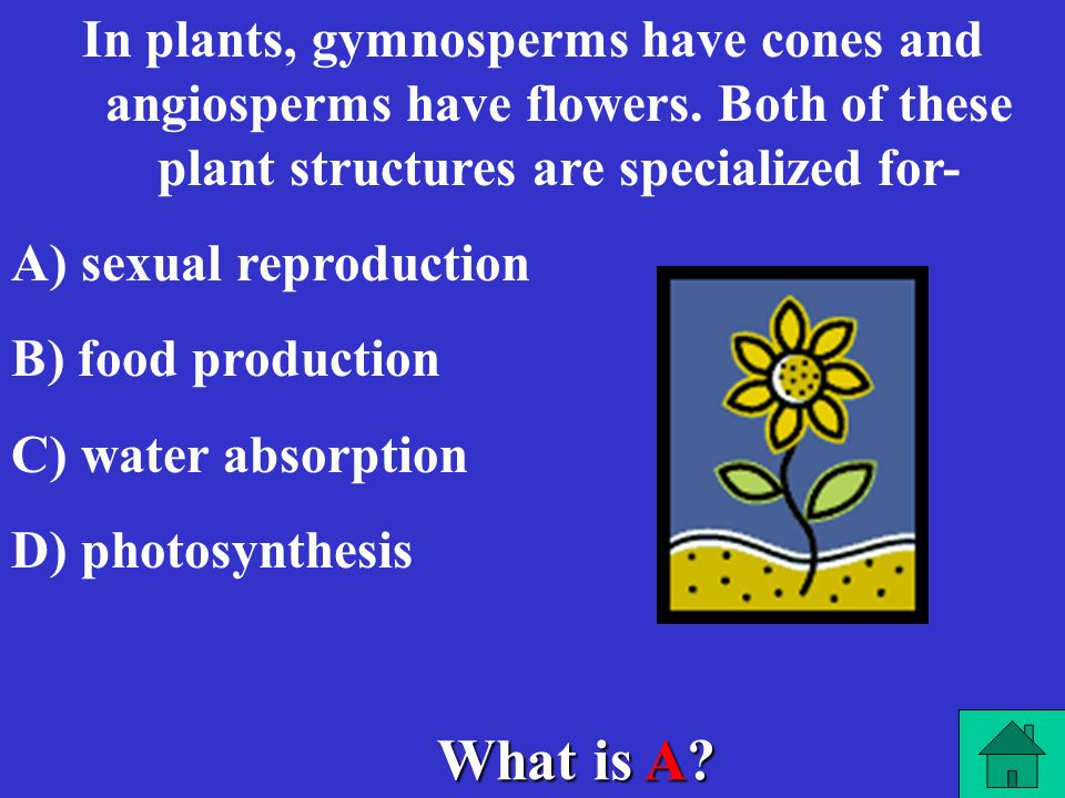In plants, gymnosperms have cones and angiosperms have flowers