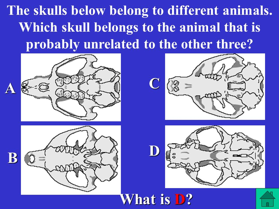 The skulls below belong to different animals