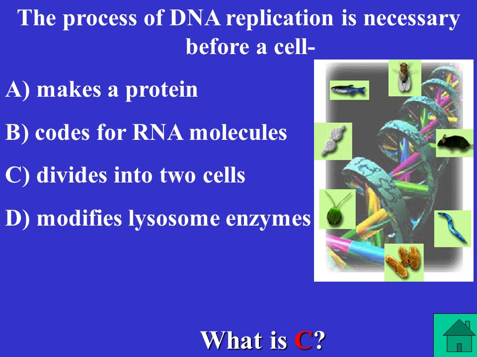 The process of DNA replication is necessary before a cell-