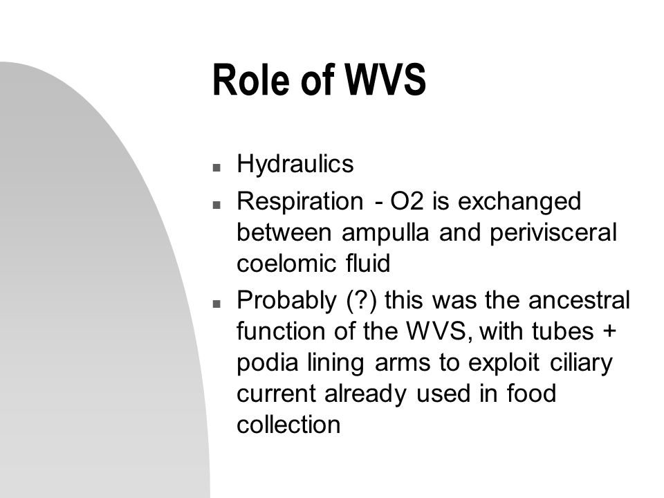 Role of WVS Hydraulics. Respiration - O2 is exchanged between ampulla and perivisceral coelomic fluid.