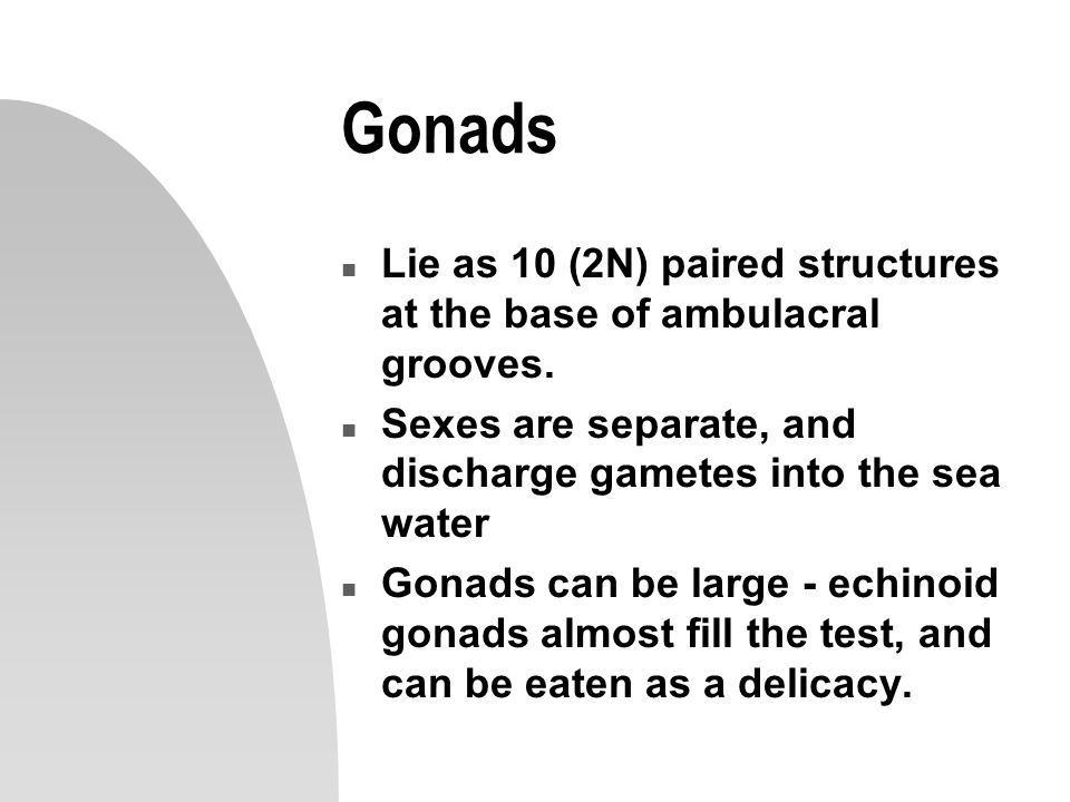 Gonads Lie as 10 (2N) paired structures at the base of ambulacral grooves. Sexes are separate, and discharge gametes into the sea water.