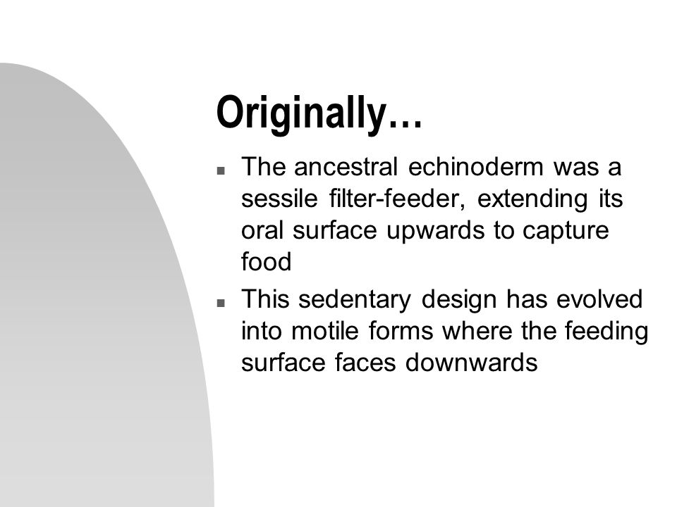 Originally… The ancestral echinoderm was a sessile filter-feeder, extending its oral surface upwards to capture food.